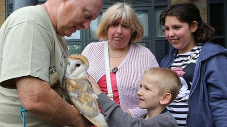 Little Frankie makes friends with Billy the barn owl at Bishop Challoner school's open day... keeper