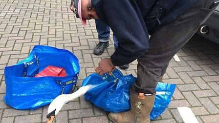 Bagging up... Swan Sanctuary rescueing contaminated birds