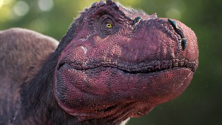 Tyrannosaurus... face only a mother can love! Picture: Dinosaurs in the Wild