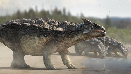 Thirsty work for the ankylosaurus family. Picture: Dinosaurs in the Wild