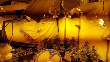 Inside raided flat in Limehouse where police say they found this cannabis farm operation. Picture so