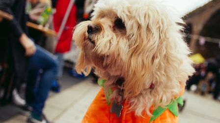 'Canary Woof' dogshow returns to Limehouse on July 1. Picture source: Limefest