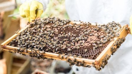 Honey from the bees. Picture: Emerson Utracik