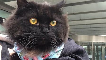 Royal London Hospital's newest volunteer visitor.... Picture: Pets As Therapy
