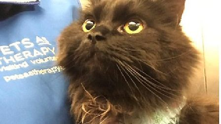 ... the cat that provides an escape for patients to recover. Picture: Pets As Therapy