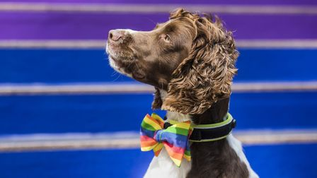 Harley... the Canary Wharf security dog standing proud for Pride 2019 with a rainbow collar. Picture