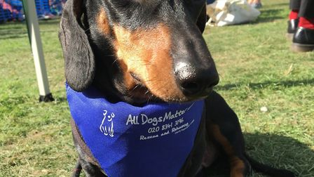 One winning pooch that took the biscuit at last year's Victoria Park dog show. Picture: All Dogs Mat