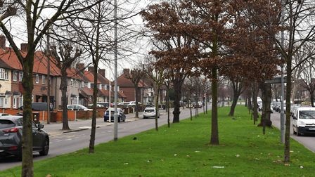 More street trees have been announced. Picture: Ken Mears