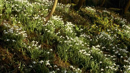 Snowdrop Valley at Anglesey Abbey
