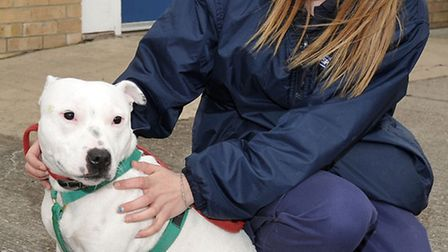 Dodger with Siobhan, animal care assistant from the RSPCA.