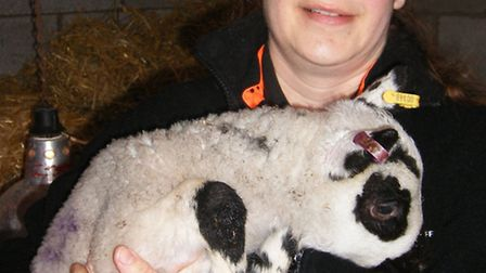 Agricultural director Linda Kirby with one of the orphan lambs
