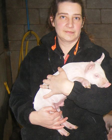 Agricultural director Linda Kirby with one of the 50 piglets born after artificial insemination.
