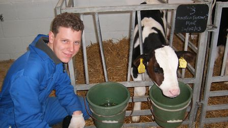 Level 2 agriculture student Jamie Chapman, 18, from Hadenham, tends to one of the new calves as it l