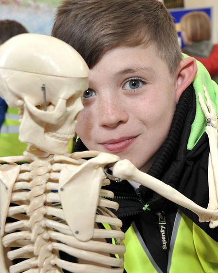 March Community Centre.Year 6 Careers Convention. Brandon takes a look at the skeleton on the nursin