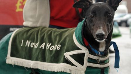 Retired greyhounds need a home were at the Asda store in Wisbech. Bruno.
