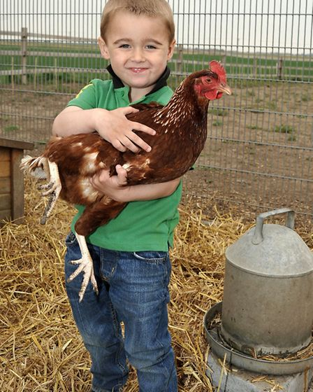 Enormous egg has been laid by a chicken belonging to 3-year-old Alfie Benstead. Picture: Steve Willi