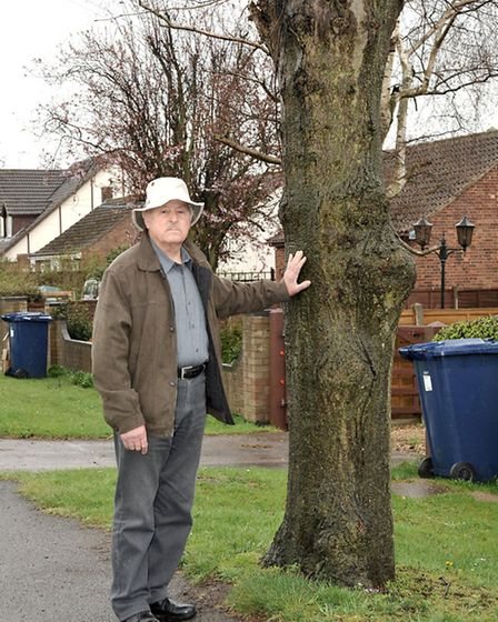 Alan Palmer next to a similar tree to those that have been cut down on Upwell road March.