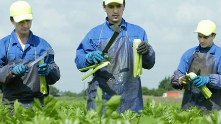 Migrant workers are employed within many sectors across the East of England -