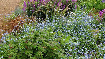 One of the beautiful displays at the Elgoods Brewery gardens