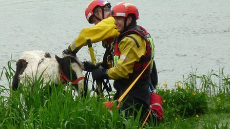 Horse Rescue at Mepal river