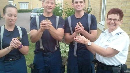 Ely fire crew sent to rescue ducklings stuck in Soham drainpipe