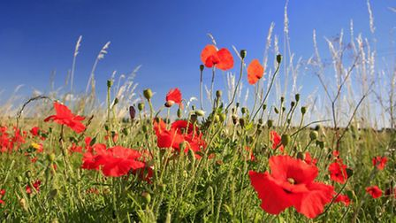 Next year is the centenary of the start of the First World War