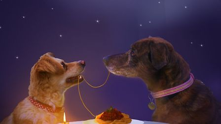 Chockie and Scruffy, who remind volunteers of Lady and The Tramp, are looking for a new home.