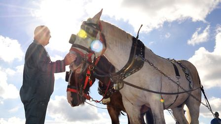 Heavy horses at last year's Prickwillow Ploughing Festival.