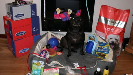 Jet, one of the centre's rescue dogs, with goods bought through proceeds from the pet show.