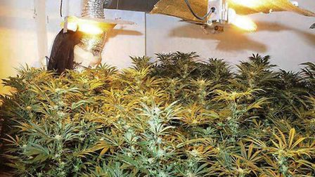 Cannabis with a potential street value of up to 75,000 was found at the house.