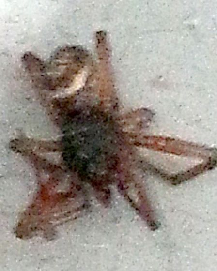 The spider Gary Tustin discovered .