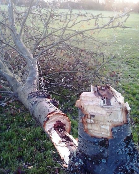Damage to tree in Manor Leisure grounds, Whittlesey