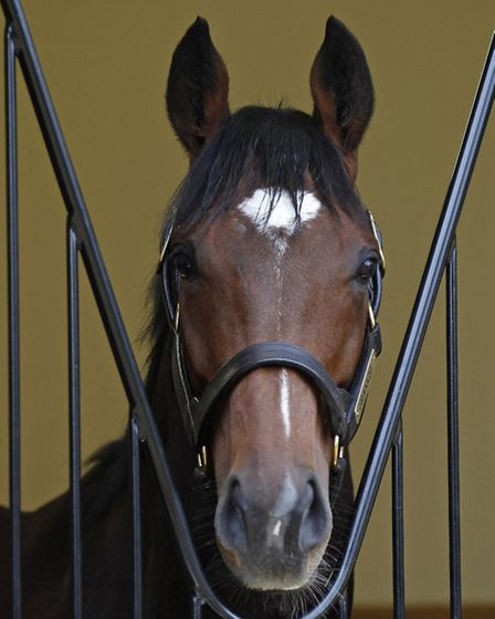 Frankel in his new box at Juddmonte Farms Banstead Manor Stud