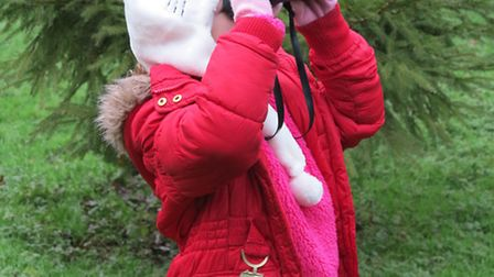 Bird watching and nest building event in Great Dunmow