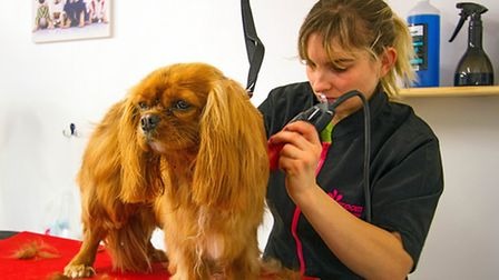 Rebecca Mackie gives Molly a five-star pampering experience. Picture: PAT RINGHAM