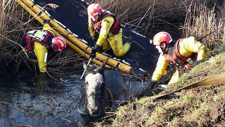 Firefighters rescuing the horse after it became trapped in a ditch in Begdale.
