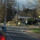 Reader's photo of tree which caused disruption at Ely station