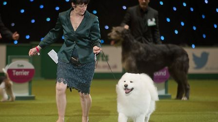 Sue Smith and Dan the Man in the best in show contest at Crufts 2014. Picture: onEdition