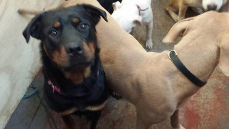 Some of the dogs removed by the RSPCA from the March Pet Rescue centre