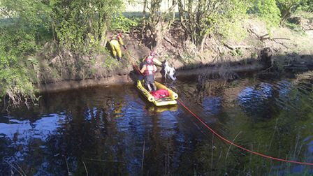 A foal is rescued from a river bank. Picture: CAMBS FIRE AND RESCUE