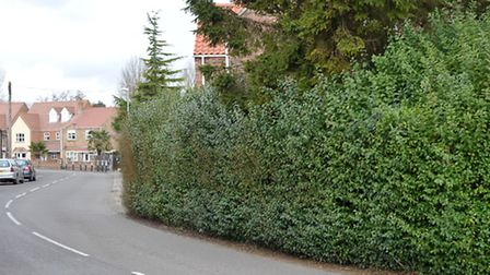 Over grown hedge narrowing the carriageway 44 meters SW of the former Elm Post office towards Friday