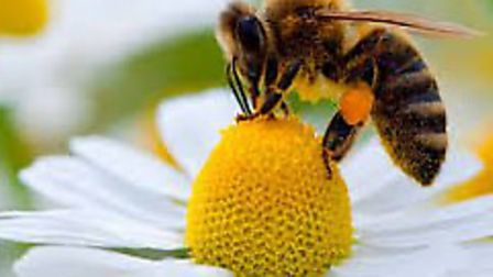 Peckover House is buzzing for bee day