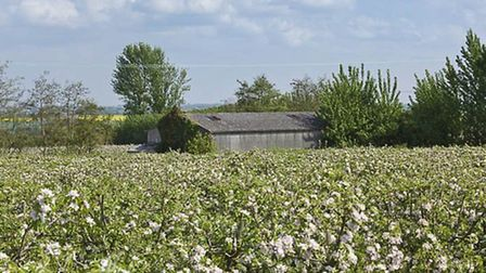 Hinton Hall Farm is a mix of orchards and arable fields