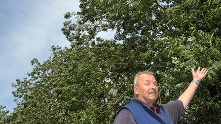 Colin Harley showing his side of the trees.Trees at West End, March. Picture: Steve Williams.