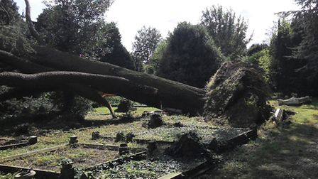 First photos of the fallen tree at Station Road, March, cemetery (Photo: Sian Bond)