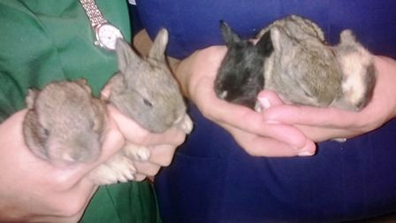 The five kits were discovered abandoned in a box in Soham
