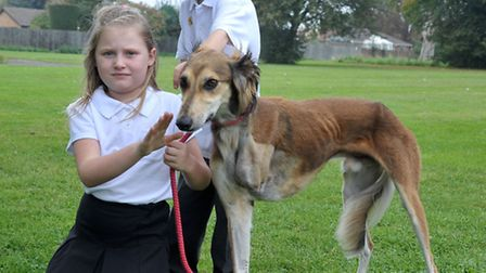Shelley Ridgeon is a foster carer for Ravenswood Pet rescue. Ellie-Mae and Louie with Douglas had to