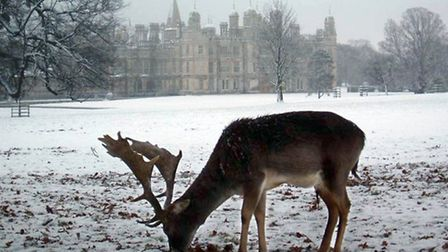 Burghleys parkland is open throughout the Christmas period and is the perfect setting for a winter w