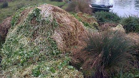 More than 1,000 tonnes of pennywort has been removed from the River Great Ouse.