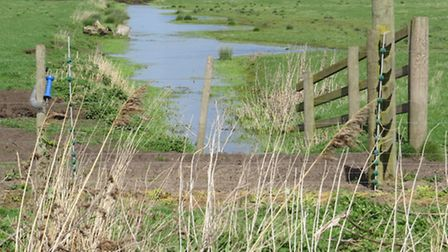 Opening of new Lady Fen Wetland at Welney